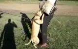 inanılmaz güçlü köpekler
