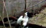 striptiz yapan kedi :))