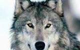 Charlton 2-1 Wolves (Maç Özeti) view on izlesene.com tube online.