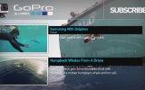 Gopro: Petting A Tiger Shark