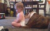 Köpek Bebeğin Sırtını Yalarsa