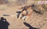 Aslan, 6 Ay Sonra Gördüğü Bakıcısının Kucağına Atladı