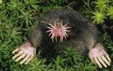 Dünyanın En Tuhaf 10 Hayvanı