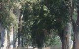 Ağaç Tünel - Muğla Marmaris Yolu
