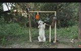 Ice Bucket Challange Yapan Köpek