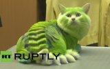 Kediyi Dragona Dönüştüren Ruslar